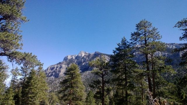 Mt. Charleston Fall