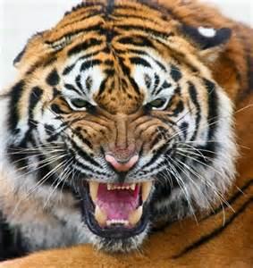 Harimau 2